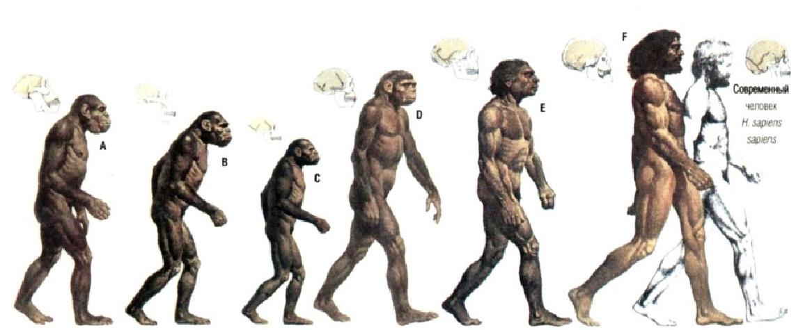 Еволюция морали